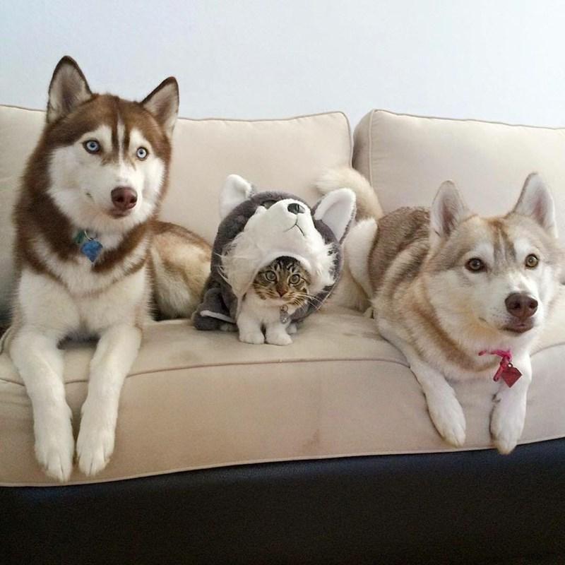 cat fits in