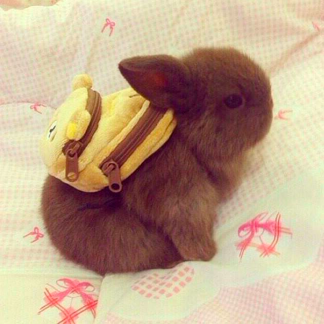 knapsack bunny