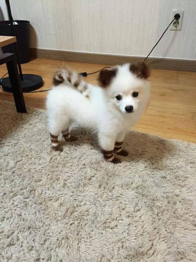 stripe pup 2