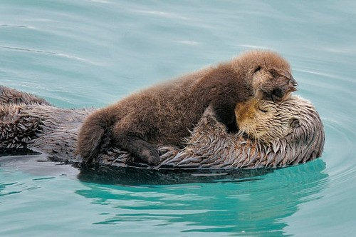 mom hug otter