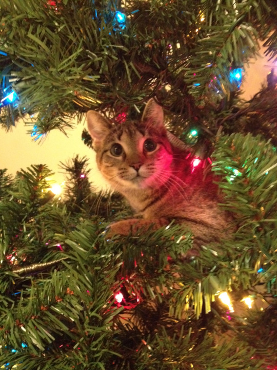 ornament cat