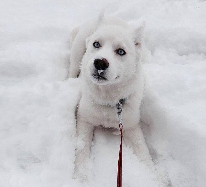 snow dog 5