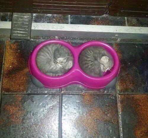 kitten bowls