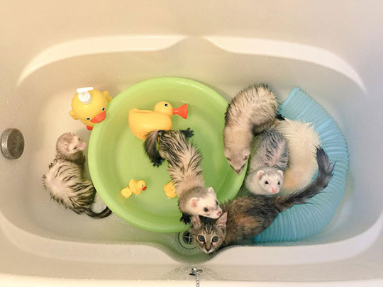 cat and ferrets 5