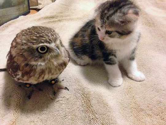 owl and pussycat 1