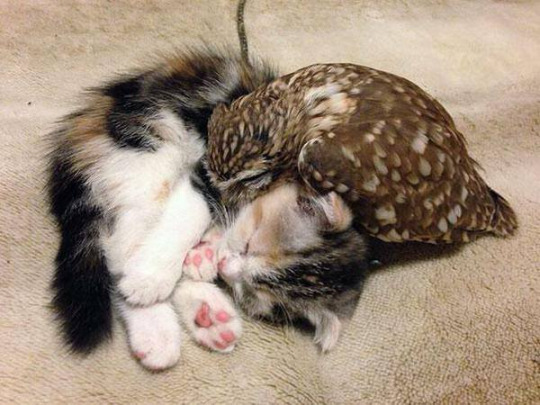 owl and pussycat 3