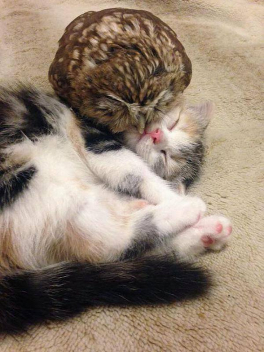 owl and pussycat 4