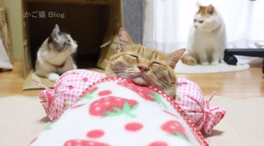 bedtime cat 1