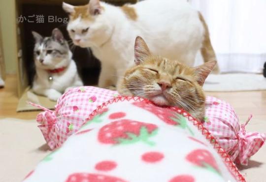 bedtime cat 2