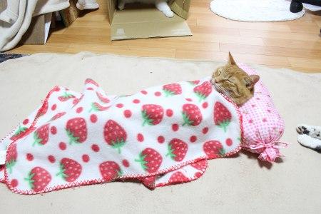 bedtime cat 3