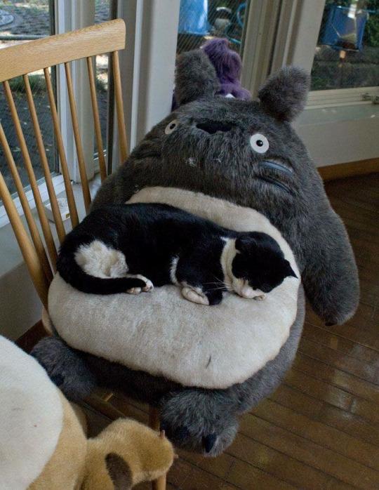 totaro nap buddy