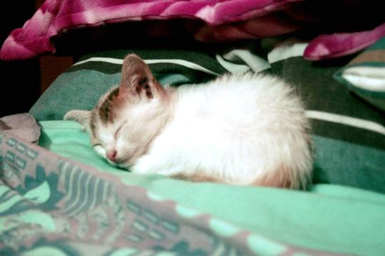 wee sleepy kitty