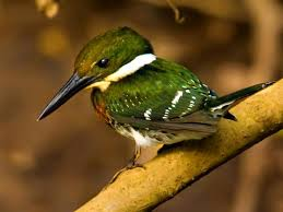 green birb