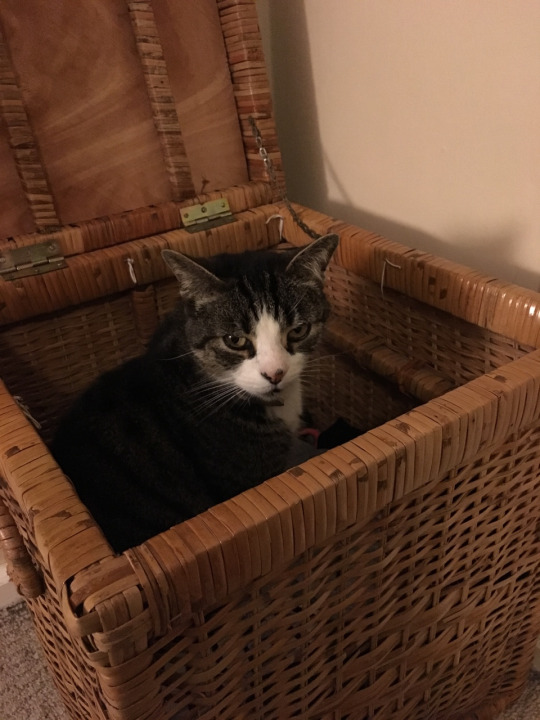 basket kitty