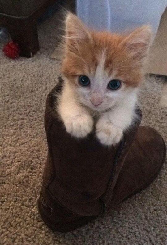 boot kitten