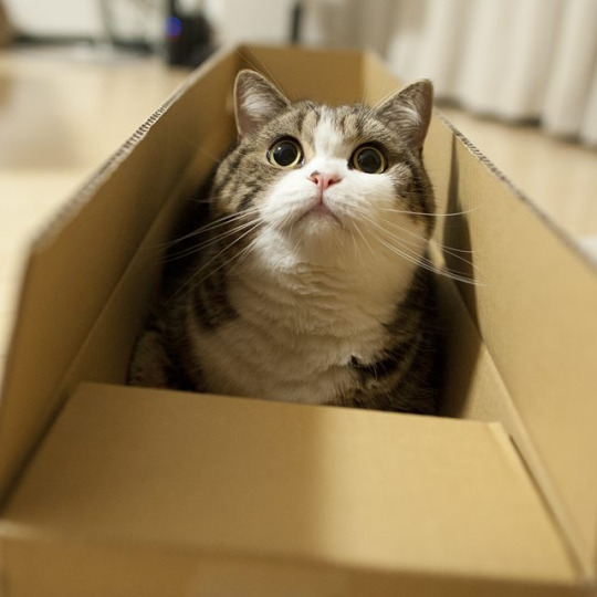 box kitty