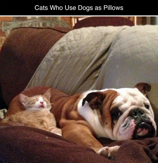 cat dog pillow 1
