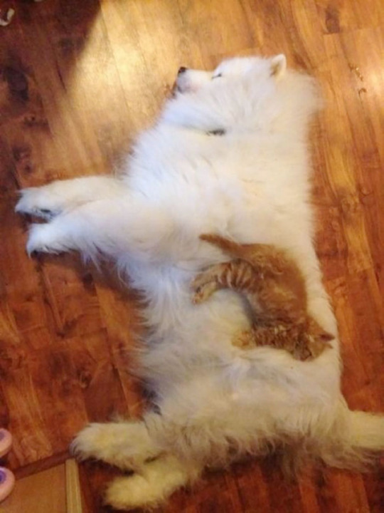 cat dog pillow 2