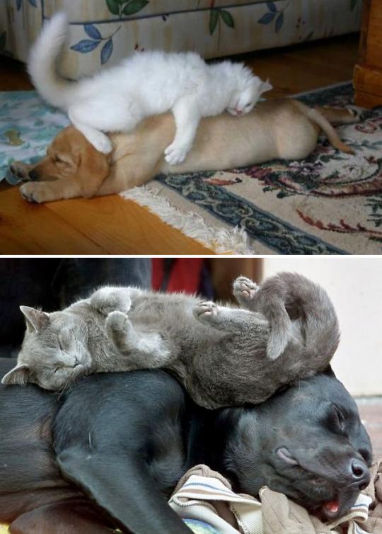 cat dog pillow 8