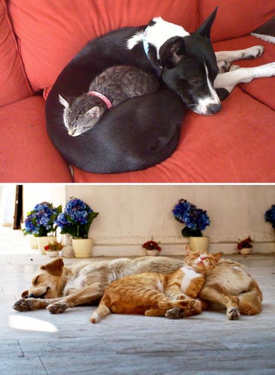 cat dog pillow 9