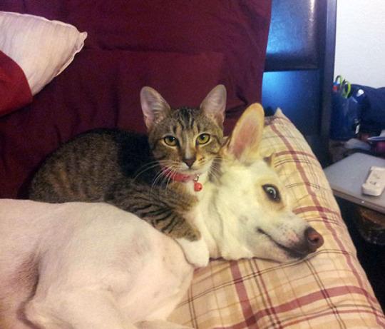 cat dog pillow 10