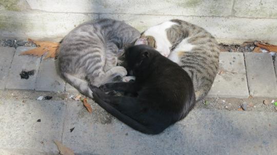 heart cuddle pile