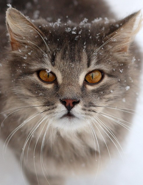 chilly cat