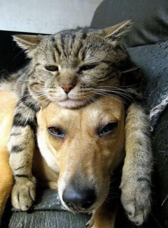 cat dog pillow 4
