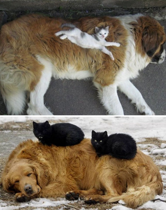cat dog pillow 5