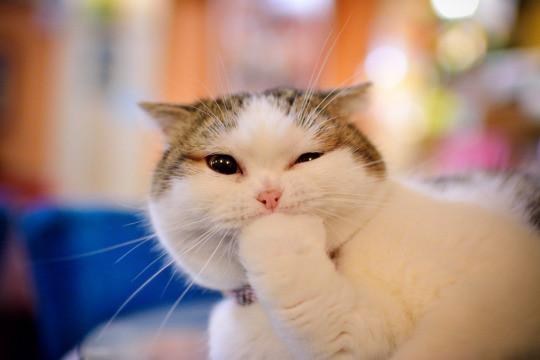 paw chin