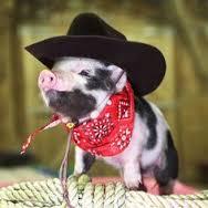 western pig