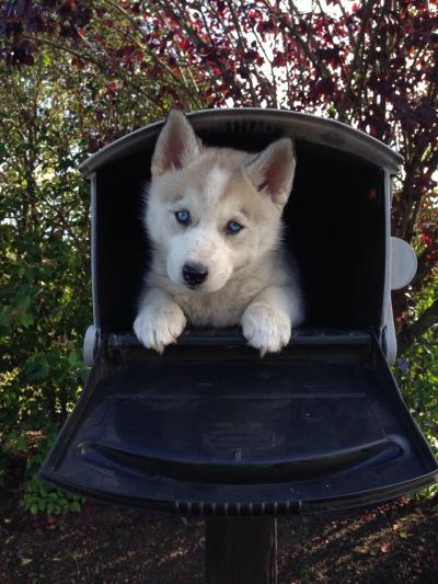 maildog 1