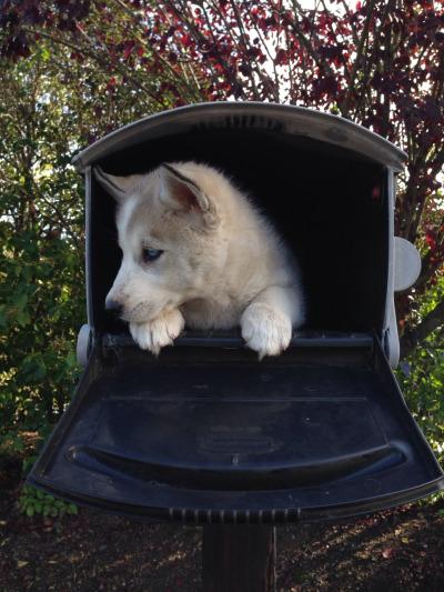 maildog 2