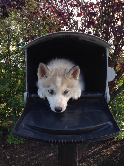 maildog 3