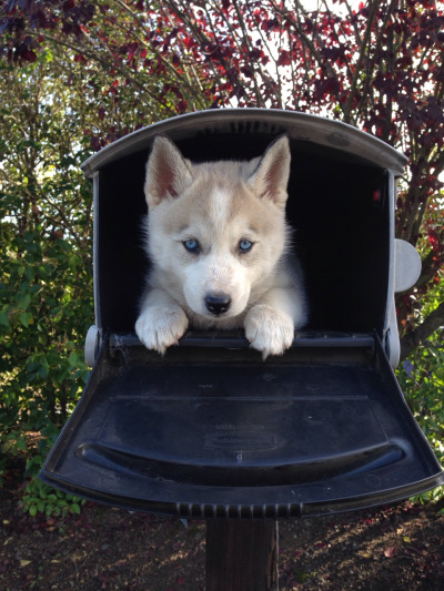 maildog 4