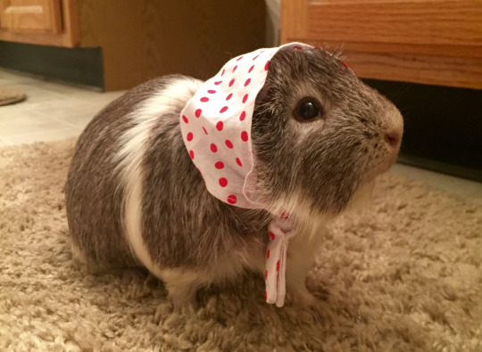 peeg in bonnet
