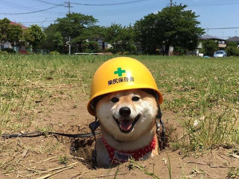 safety dog