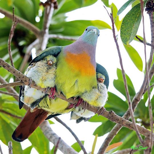 protective mom