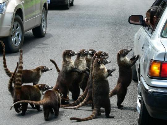bandi swarm