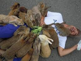 bunny swarm