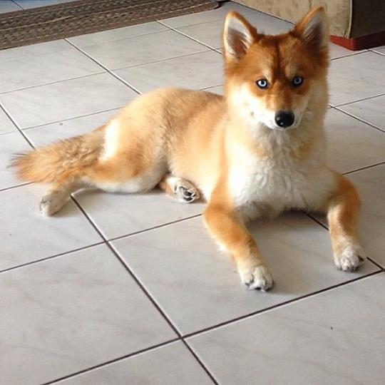 Fox the Dog