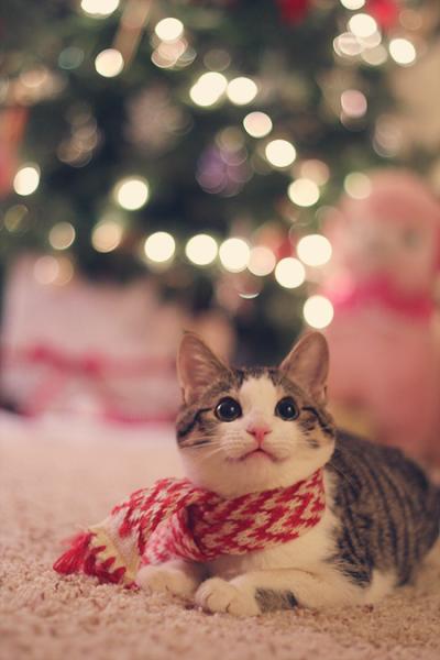 xmas scarf kitty