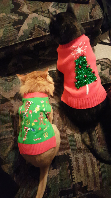 xmas sweater cats