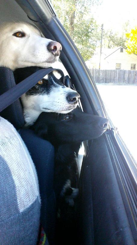 dog pals 8