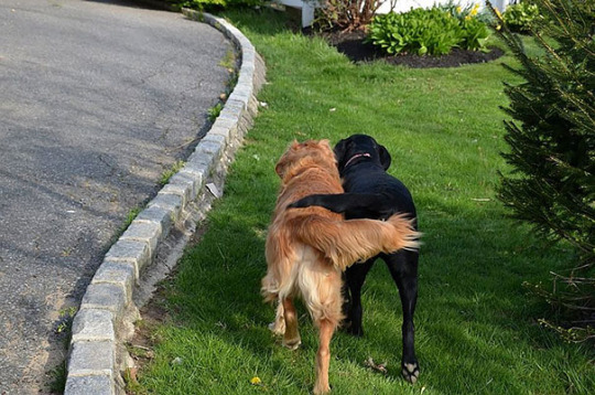 dog pals 9