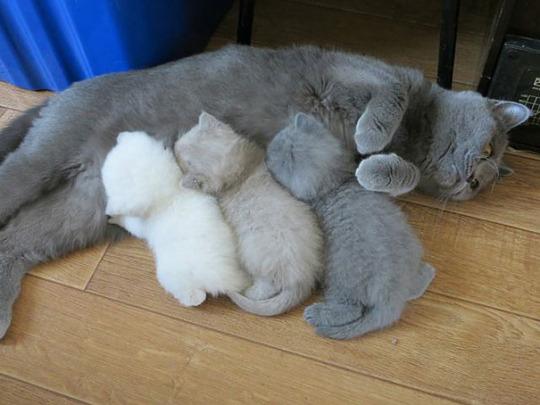 cat mom 1