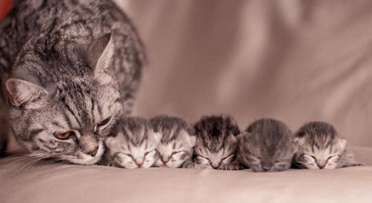 cat mom 4