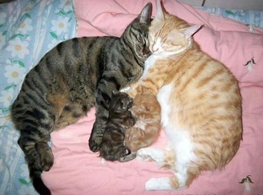 cat mom 5