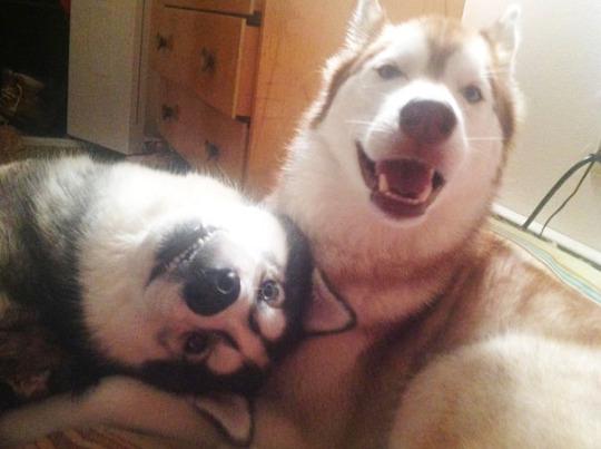 dog pals 3