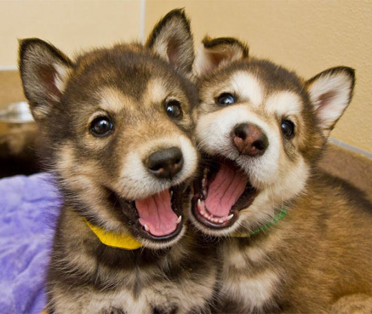 dog pals 4
